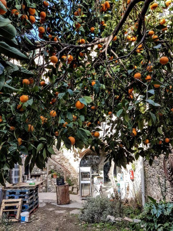 Licor de taronja